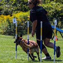 Dog Training at K9 Central Pet Resort and Day Spa